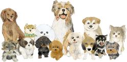 完全入替制の小型、中型犬専門サロン